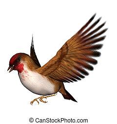 escarlata, pájaro cantor, pinzón