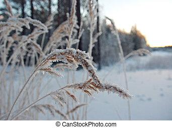 Escena de invierno. Flor congelada.