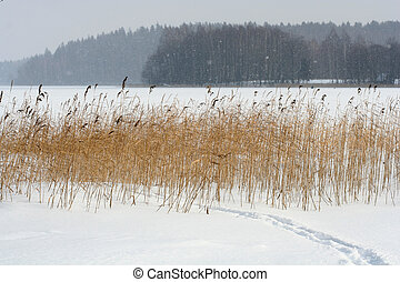 Escena de invierno
