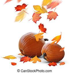 Escena de otoño de calabazas maduras