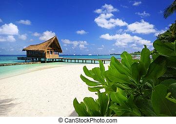 Escena de playa