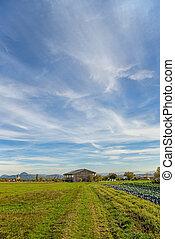 Escena del campo en otoño