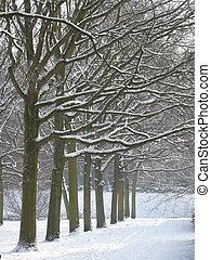 escena, invierno