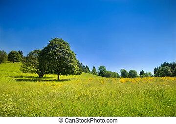 Escenario rural idílico con prado verde y cielo azul profundo
