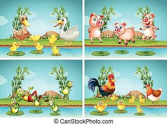 Escenas con animales de granja