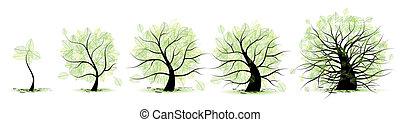 Escenas de la vida del árbol: infancia, adolescencia, juventud, adultez, vejez