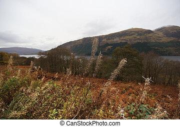 escocés, otoño, arbustos, tierras altas