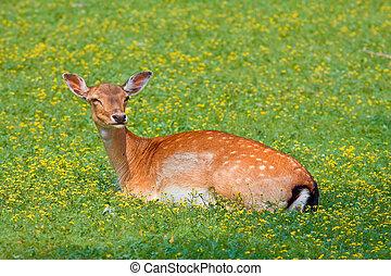 Esconderse en una mancha de hierba en el bosque