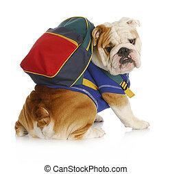 Escuela de obediencia de perros