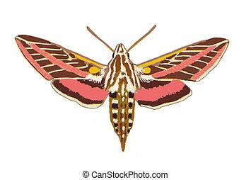 esfinge, moth