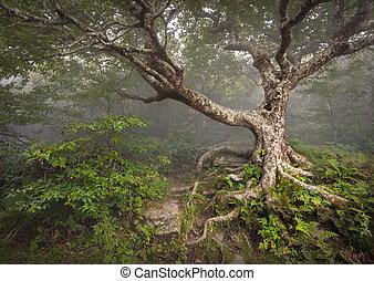 Espeluznante árbol de cuento de hadas espeluznante bosque fantasma de bosques apalaches paisaje de fantasía NC en los jardines de las montañas de las colinas azules cerca de Nashville North Carolina