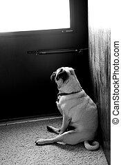 Esperando a Doug