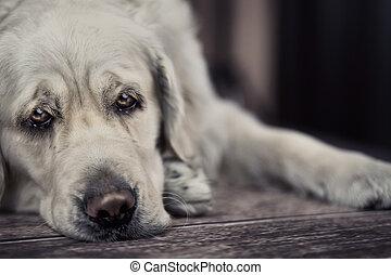 esperar, maestro, perro, triste