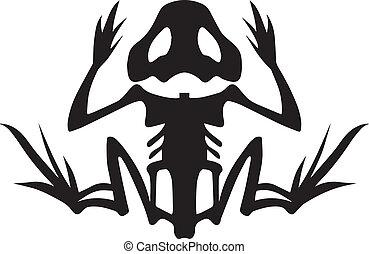 esqueleto, rana