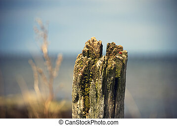 Estaca de madera