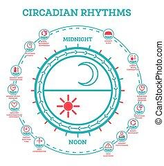 estela, exposición, infographic, rhythm., cycle., sueño, hormonas, luz del sol, esquema, production., regula, circadian, elements.