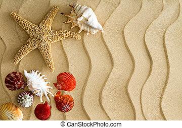 Estrellas de mar y conchas marinas en la arena de playa ondulada