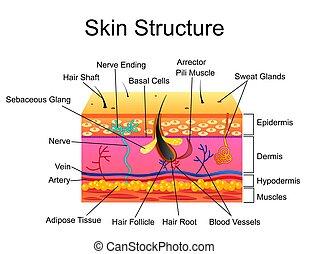 Estructura de piel humana, ilustración vectorial de fondo aislado