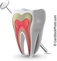 estructura, diente