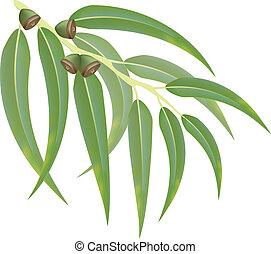 eucalipto, vector, illustration., branch.