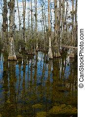Everglades pantano