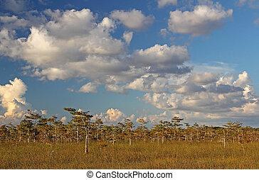 Everglades Parque Nacional