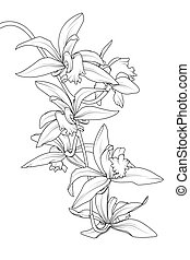 Exótica planta de flores tropicales. Botánica realista detallado esquema de dibujos de línea blanca negra.