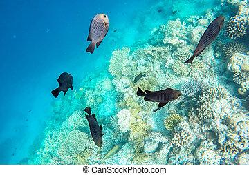 exótico, marina, maldivas, vida
