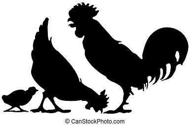 Familia de pollo
