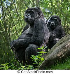 Familia gorila de las tierras bajas occidentales