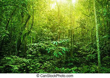 Fantástico bosque tropical denso