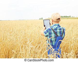 Farmer fotografiando planta de trigo en el campo, usando en tablet. La cosecha de trigo.