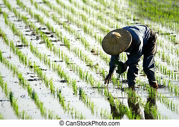 Farmer trabajando en la granja