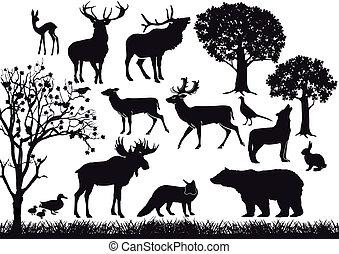fauna, bosque