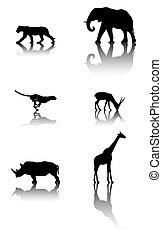 fauna, conjunto, animales