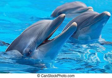 feliz, delfines