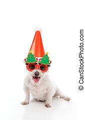 Feliz fiesta de Navidad de perros