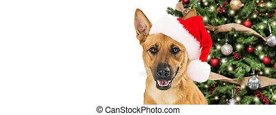Feliz Navidad pancarta web de perros