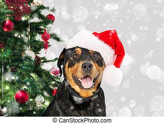 Feliz Navidad perro por árbol