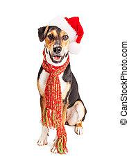 Feliz Navidad perro sabueso