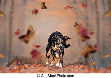 feliz, suelo, otoño, corriente, hojas, perro