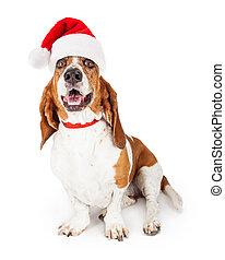 Feliz y sonriente perro de Santa Claus
