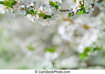 flor, árbol, manzana, primavera, rama