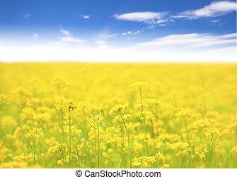 Flor amarilla en el campo y fondo azul cielo