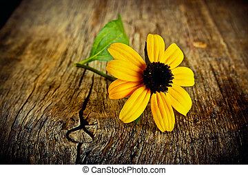 Flor amarilla en una tabla vieja