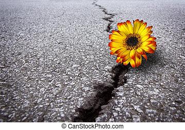 flor, asfalto