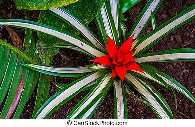 flor, bromelia, américa, tropical, specie, flor, planta, primer plano