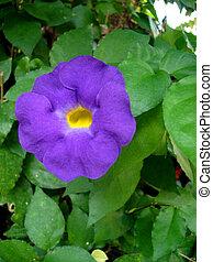 Flor cerca