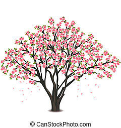 flor, cereza, encima, árbol, japonés, blanco