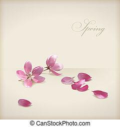 flor, cereza, vector, diseño, primavera, floral, flores